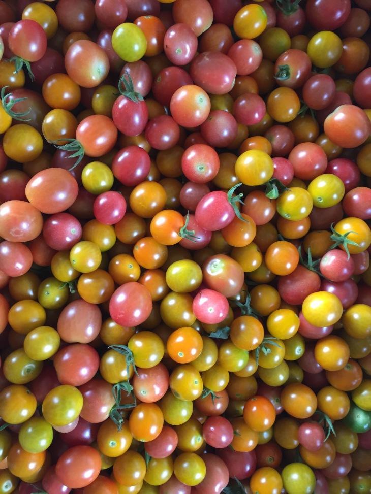 Cherry tomato harvesting
