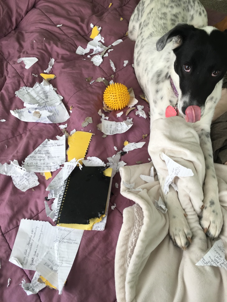 Dog eats notebook